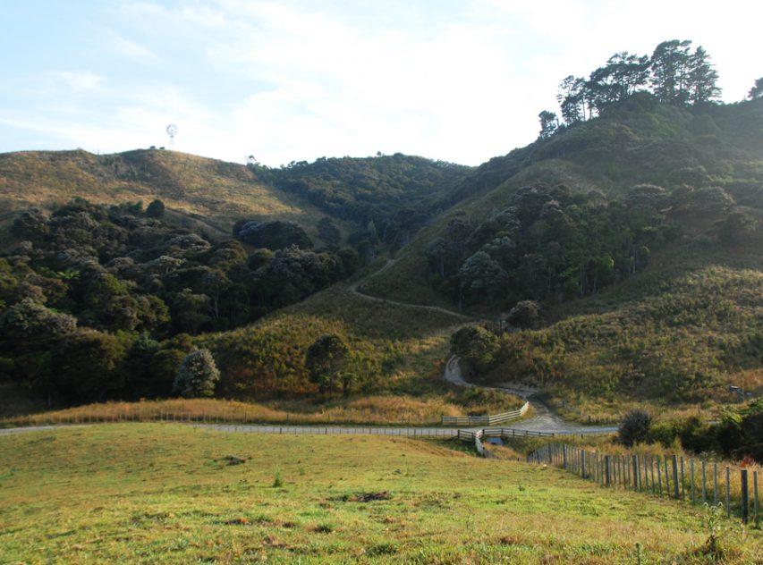 Northern view of revegetated hillsides